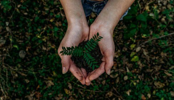 Jemand hält eine grüne Pflanze samt Wurzeln und Erde in der Hand